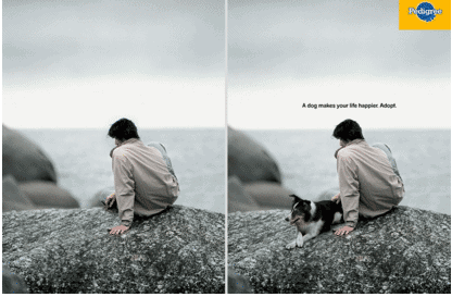 Pedigree Ad